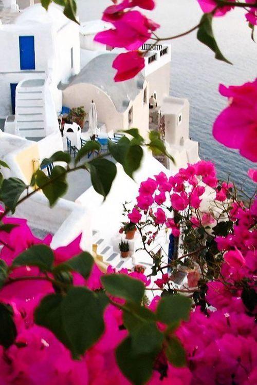 Bougainvillea, Santorini, Greece photo via ashley