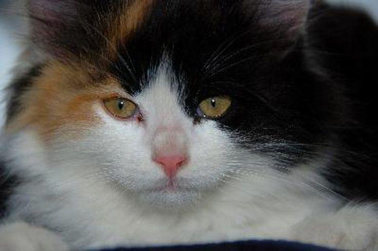 Tratamiento holístico para las infecciones urinarias de los gatos | Muy Fitness