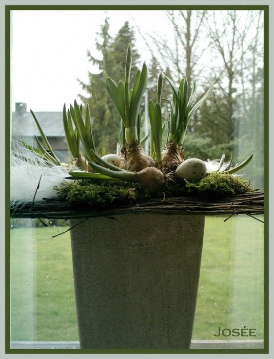 Spring arrangement with bulbs | Uploaded and made by Josée Heylen