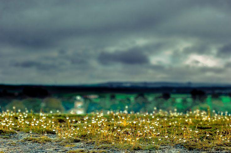 Gotas de Luz - Un mundo por descubrir
