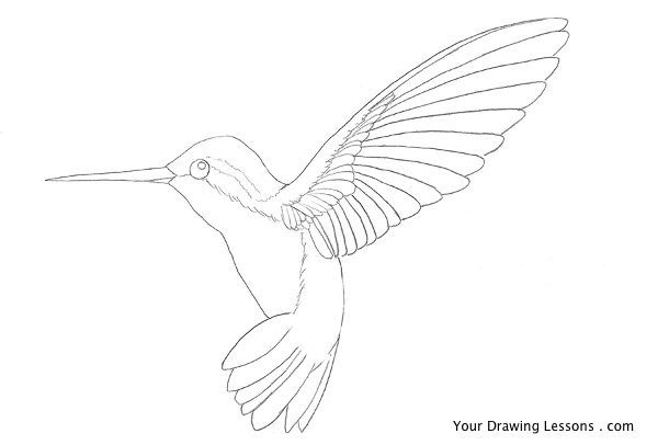 hummingbird sketches - Google Search