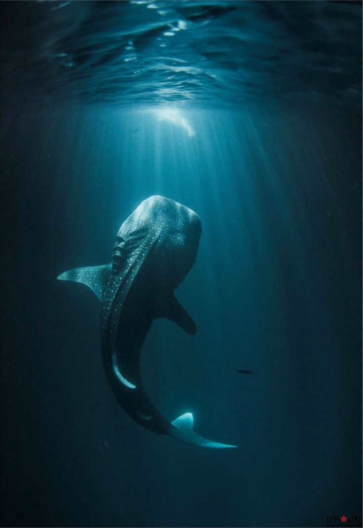 "Amazing Underwater Photography | Most Beautiful Pages ---(What a Great pic! As I've said. .......the Sea/Ocean is a Vast.......""Mystery""!!!!)"
