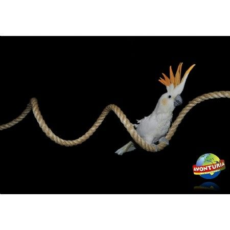Maar liefst 240 cm lang en ongeveer 2 cm dik.  Buigbaar sisaltouw is goed te gebruiken voor diverse doeleinden. Aan beide zijden is het touw voorzien van bevestigings-punten die makkelijk aan te brengen zijn in bijna iedere kooi aan het traliewerk.  Maar ook zeer geschikt voor de Zoofaria Papegaaienbomen, Speelplaatsen of voor een ruimte in en om het huis.  Klauterplezier zorgt voor goede lichamelijke conditie van uw papegaai !