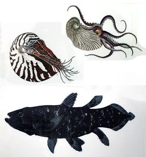 Debby Mason prints of fish and sea creatures