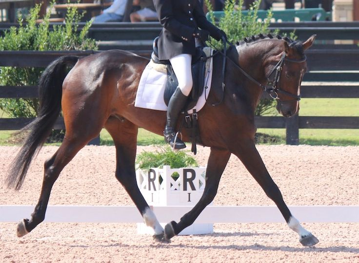 how to add up dressage scores