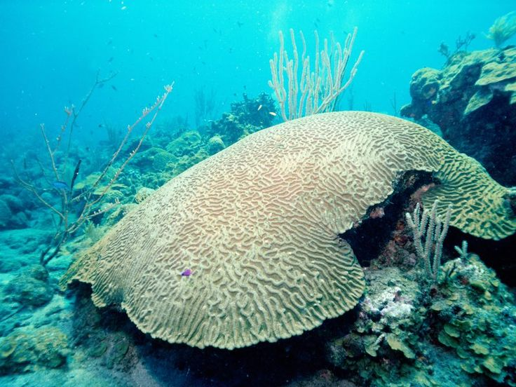 Between Bleaching and Boats, Florida's Coral Reefs Are Struggling to Survive  The reefs are crumbling in acidifying waters and buried from dredging, according to new reports. florida coral