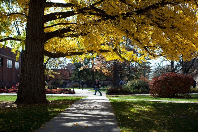 Campus - Eastern Illinois University --- I do miss walking through this every day on the way to class