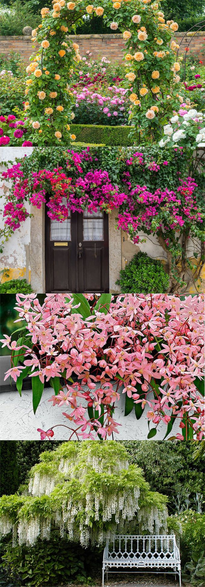 883 best images about garden paths on pinterest shade garden - 20 Favorite Flowering Vines For The Fence And Arbor