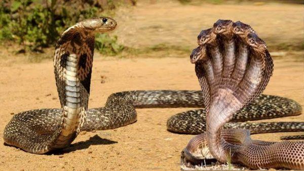 تفسير حلم الحية في المنام مجلة رجيم Animals Snake