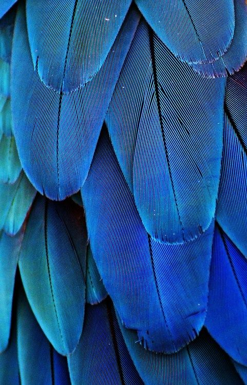 Gorgeous blue feathers Use this as a color palette on bedroom or living room