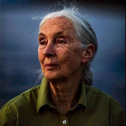 """You cannot get through a single day without having an impact on the world around you. What you do makes a difference, and you have to decide what kind of difference you want to make."" Jane Goodall photo: Michael Christopher Brown"