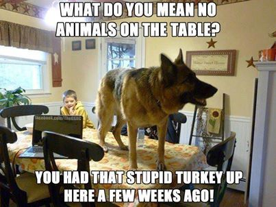 Actually... he's kind of right.  #dogs #funny