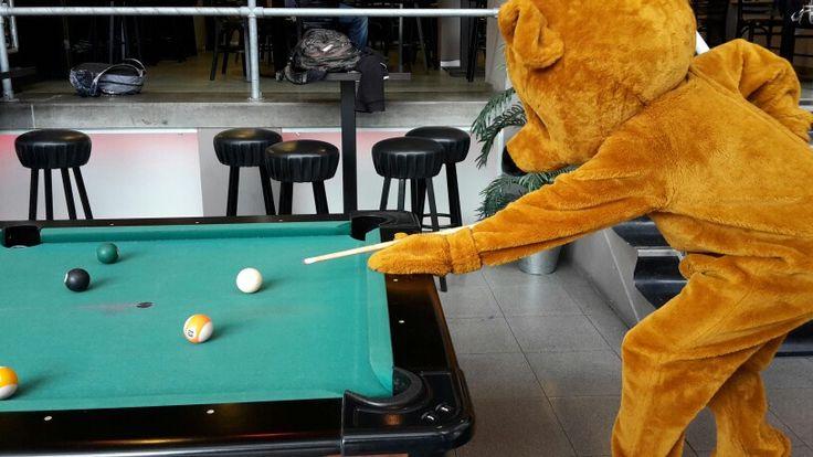 Uitdeelbeer speelt pool