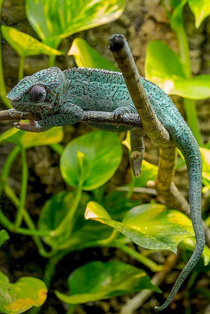 1000+ ideas about Rainforest Animals on Pinterest ...