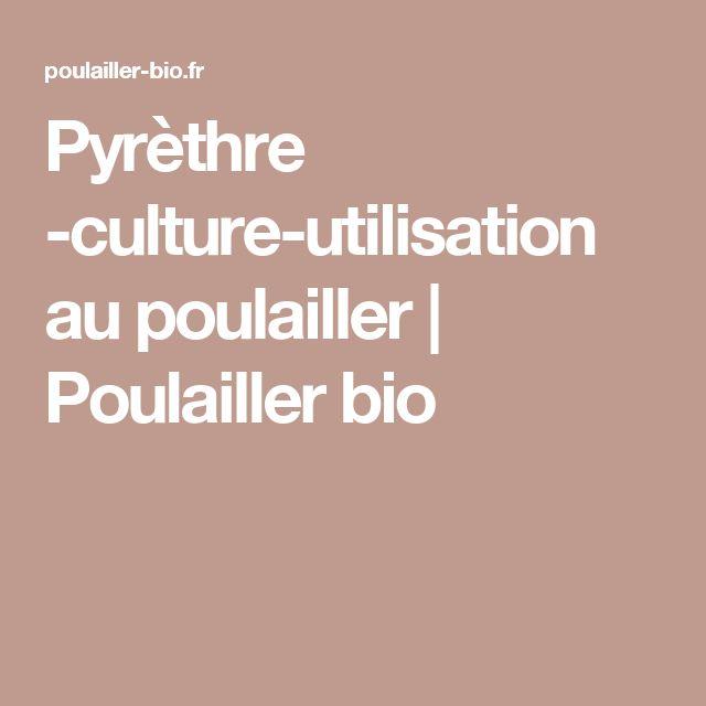 Pyrèthre -culture-utilisation au poulailler | Poulailler bio