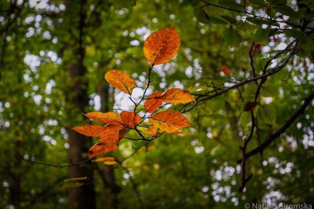 Zdjęcie! Pstryk! : Wypad do lasu