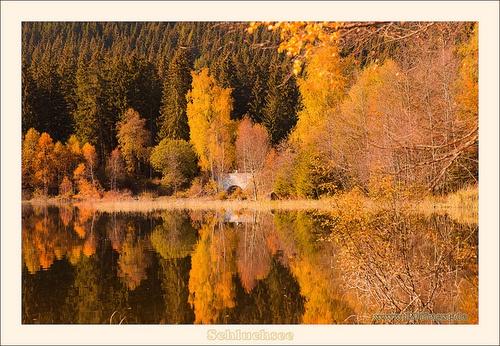 Herbst Wald am Schluchsee im Schwarzwald by Rainer Pfingst on Flickr.