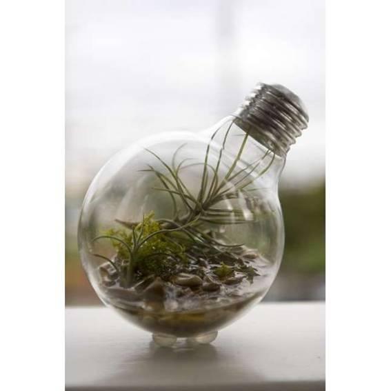 """El """"clavel de aire"""" es una planta que vive del aire principalmente, aunque suene raro, ya que de él obtiene el agua: LEER MAS: http://www.enchufix.com/blog/vivir-del-aire-planta-que-no-necesita-aire/"""