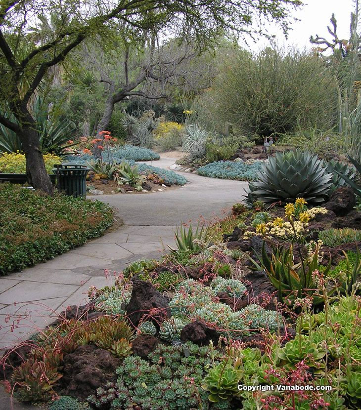 picture taken while walking through the cactus garden at Huntington Library