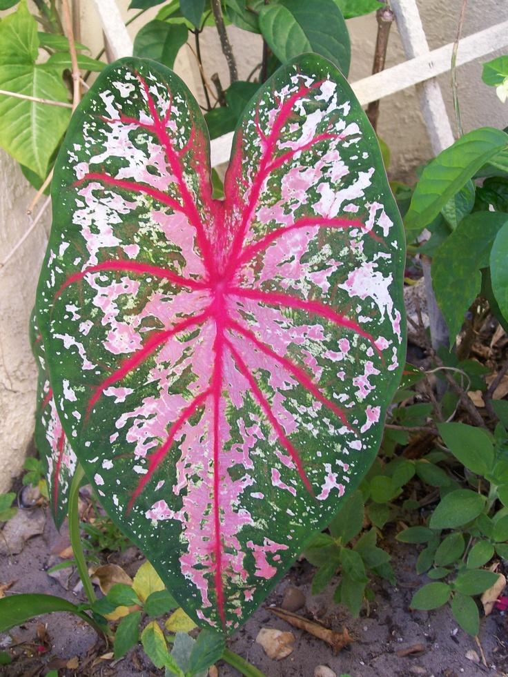 Nice leaf