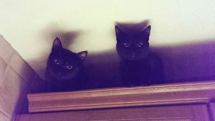 My beautiful black kitties,  Salem and Valentine ♥ #inkedandtwisted