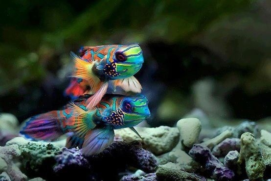 Cool fish! Pets and More Pinterest