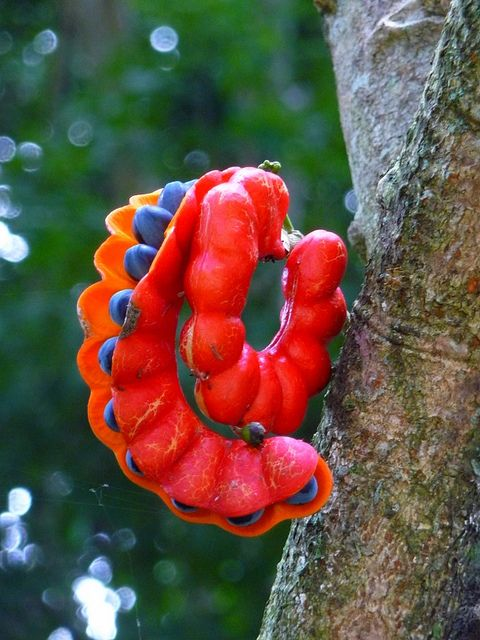Looks like a caterpillar, but it is a seed pod.  P1320799 by m0lly74, via Flickr