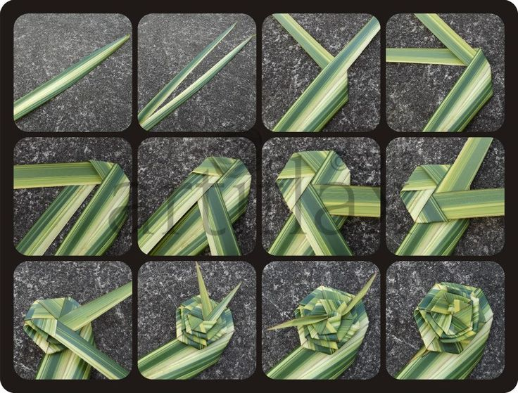 www.artiflax.co.nz A simple Putiputi (flax flower) tutorial...between images 9 and 10 you just keep repeating the the folding of the leaves until you have only an inch or two left in length then you tie each piece together in a knot.