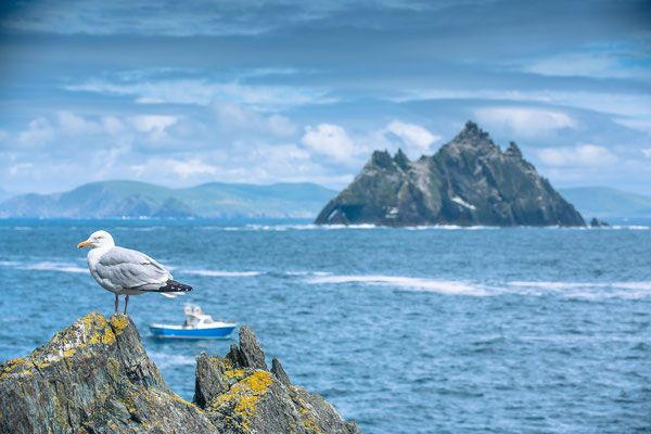 The Skellig Islands - Source : Ireland Tourism - Auteur : Caspar Diederik