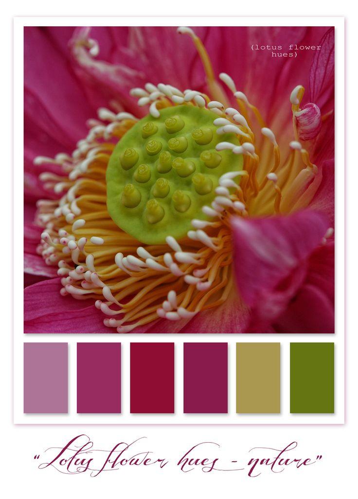 Mount Cootha Botanical Gardens, Brisbane - Lotus Flower centre...