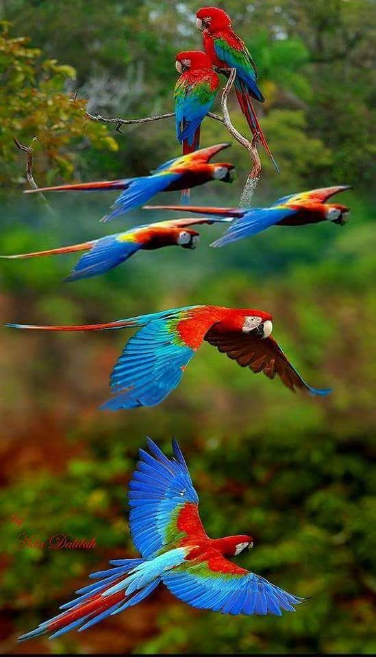 Macaws - I believe there are mire colors in nature than the human eye can see. Ultraviolet and infrared we cannot see. Could nature be using these colors?