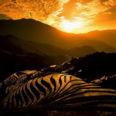terraced land, sunset