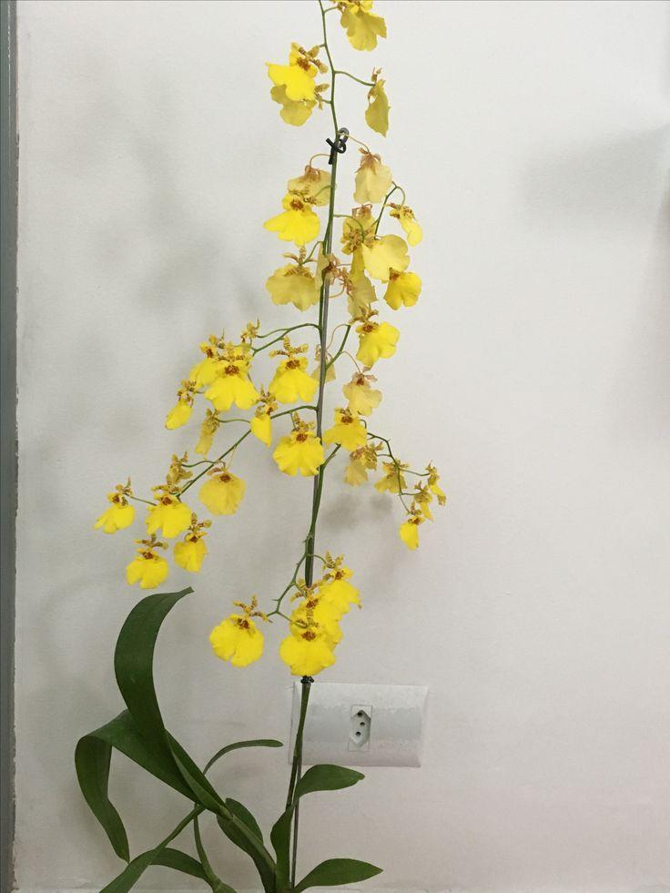 17 meilleures id es propos de dessin orchid e sur pinterest tatouage orchidee tatouages. Black Bedroom Furniture Sets. Home Design Ideas