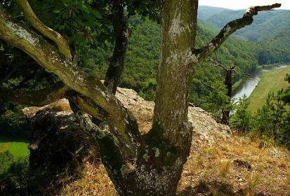 Výhled na Dyji kousek od Vraní skály – pod vámi 70 metrů.