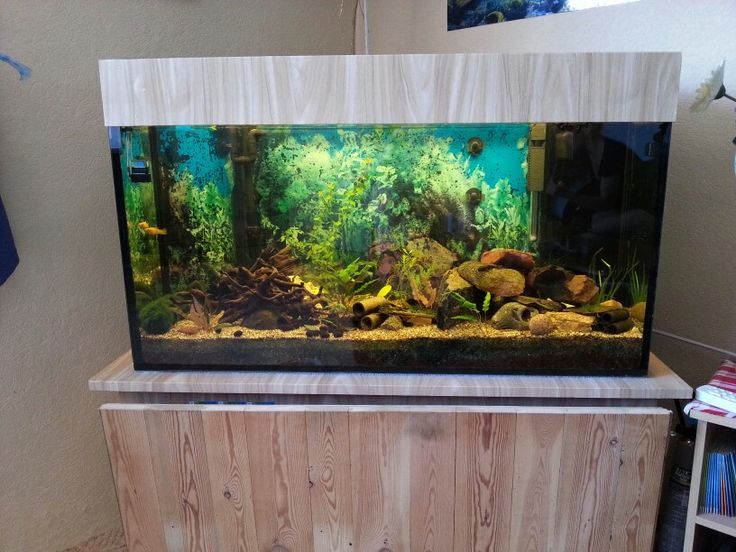 die besten 25 aquarium unterschrank ideen auf pinterest meerwasseraquarium meerwasser. Black Bedroom Furniture Sets. Home Design Ideas