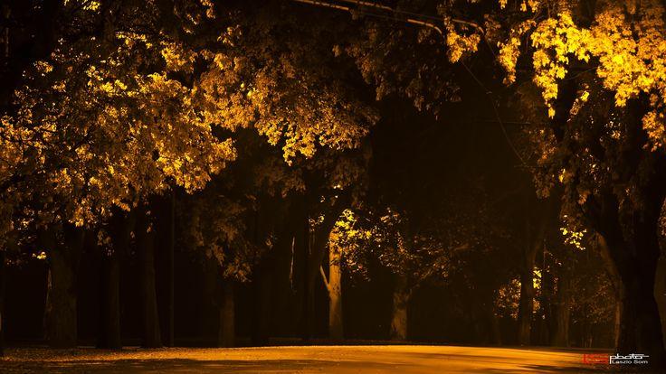 Yellow autumn street by Laszlo Som on 500px