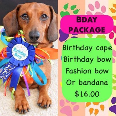 Pet Birthday Present PACKAGE on Etsy, $16.00 CAD