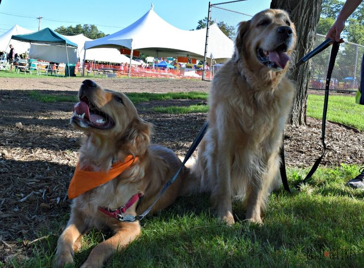 Check out all of the fun and excitement of Lollypop Farm's 17th Annual Barktober Fest, MyDogLikes