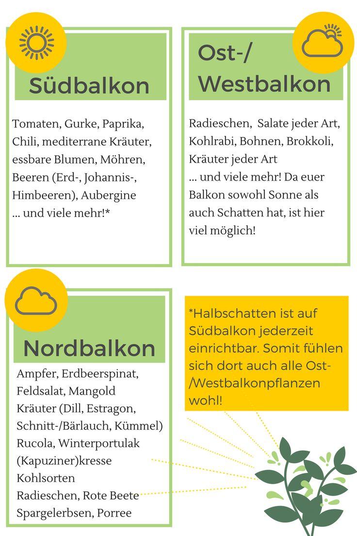 Die 25+ Besten Ideen Zu Balkon Pflanzen Auf Pinterest | Pflanzen ... Beliebte Krauter Balkon Eignen