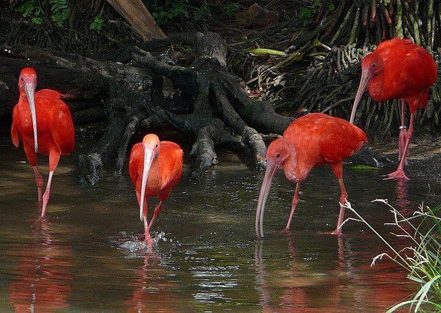 Amazon Birds | Amazon birds | Flickr - Photo Sharing!