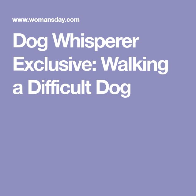 Dog Whisperer Exclusive: Walking a Difficult Dog