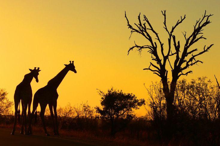 Sunrise Mpumalanga, South Africa #travel #travelinspiration