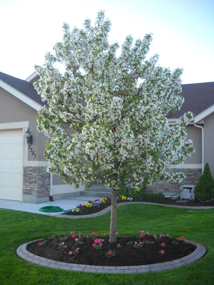 11 best crabapple trees images on pinterest flowering for Flowering landscape plants