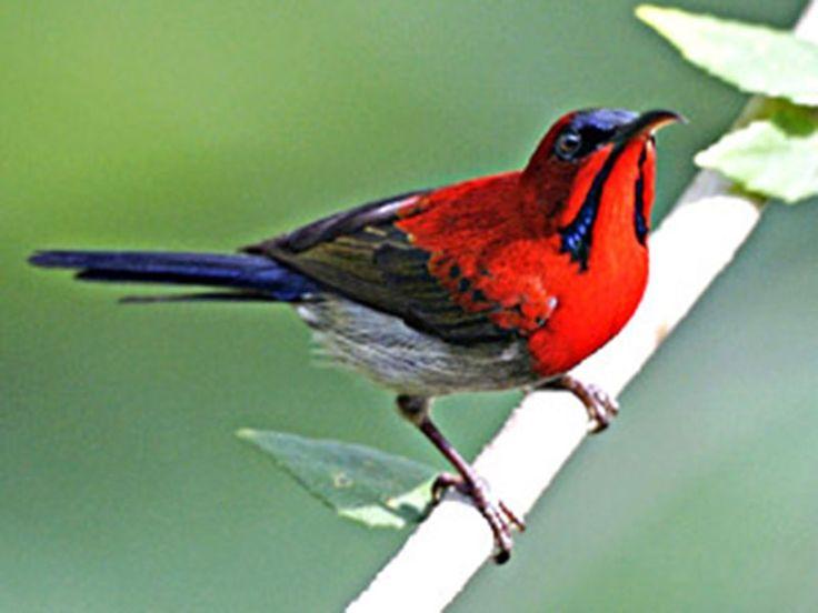 Sandi Bird Sanctuary - in Uttar Pradesh, India