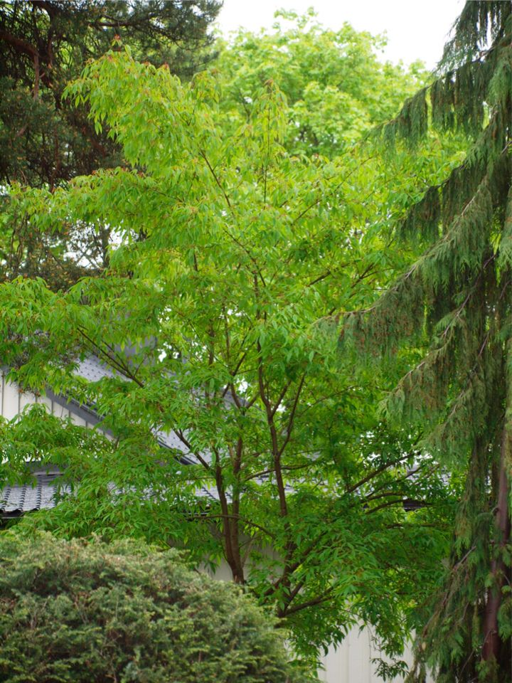 51 Best My Japanese Style Garden Images On Pinterest