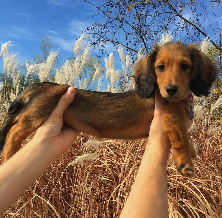 Looooooong Dog ! - Imgur