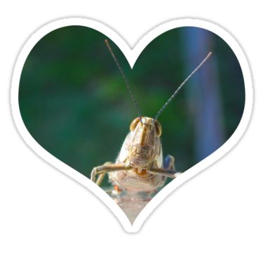 Grasshopper Heart Sticker by StickerNuts