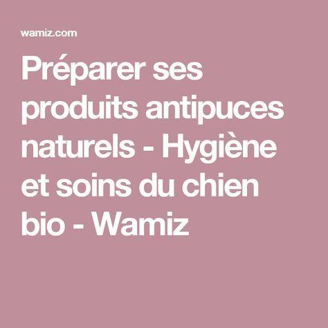 Préparer ses produits antipuces naturels - Hygiène et soins du chien bio - Wamiz