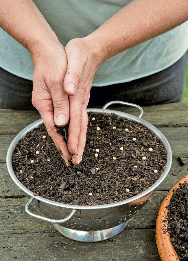 Potager sur le balcon: faire pousser de la coriandre - Marie Claire Idées