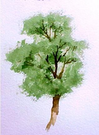Excellent tree tutorial at this site.  Visual - step by step   http://www.susieshort.net/watercolor-tip-blotted-trees.html